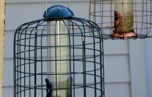 JanTech Pest Control - Pests around a bird cage
