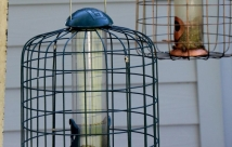 JanTech Pest Control - Pests around a bird cage